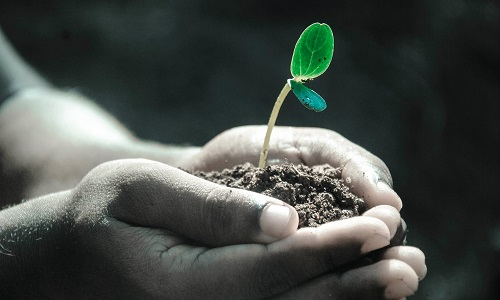 soil, hand and plants - ethical investments
