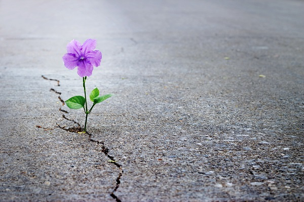 purple flower growing from a crack in the street